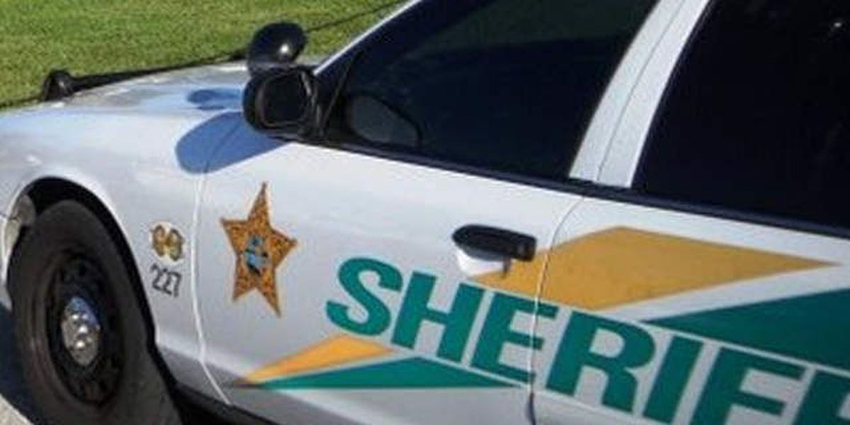Martin deputy shoots out of control bull
