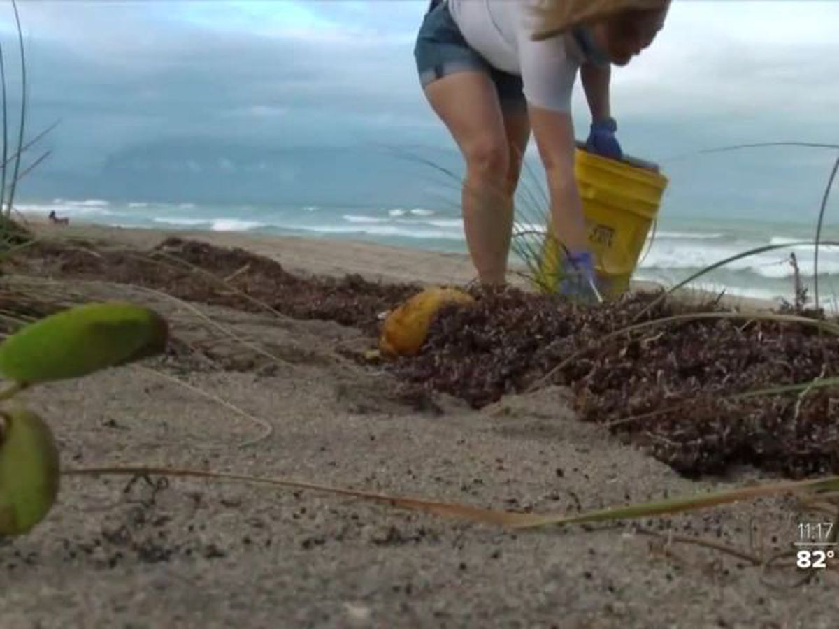 Beach cleanup crews having to downsize in order to follow CDC guidelines
