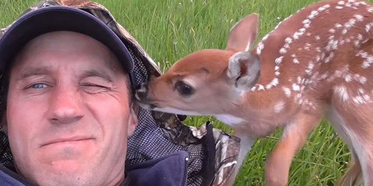 VIDEO: Loyal fawn won't leave man who rescued it
