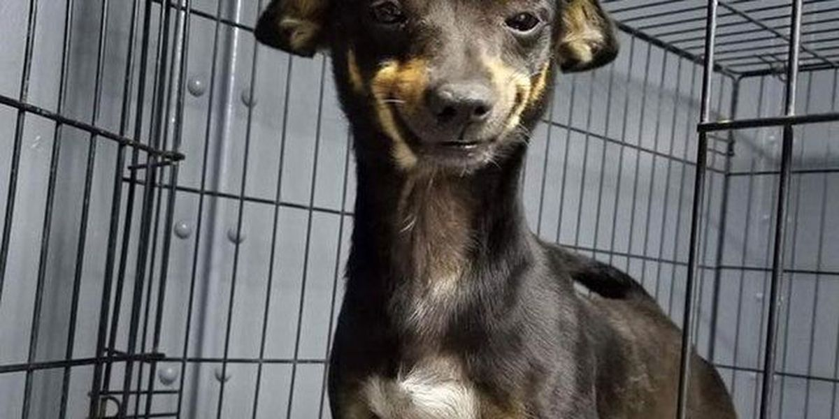 Rescue dog's adorable grin goes viral