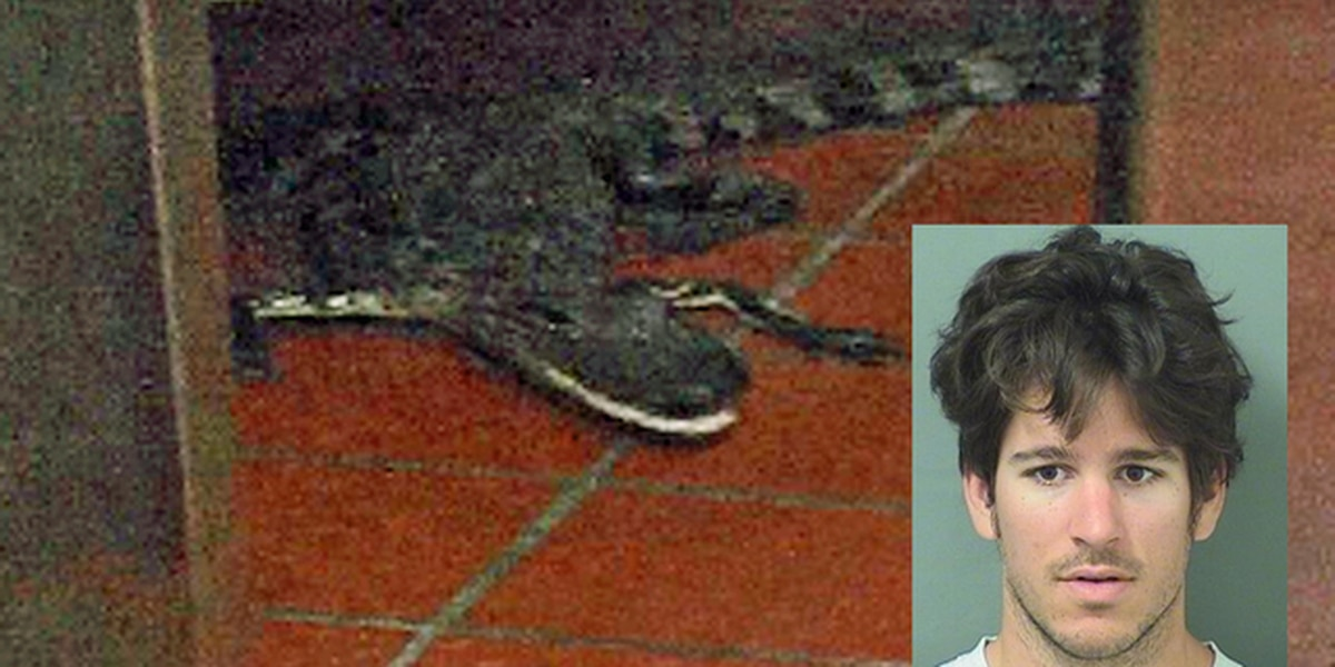 Man accused of tossing gator into Wendy's drive-thru window