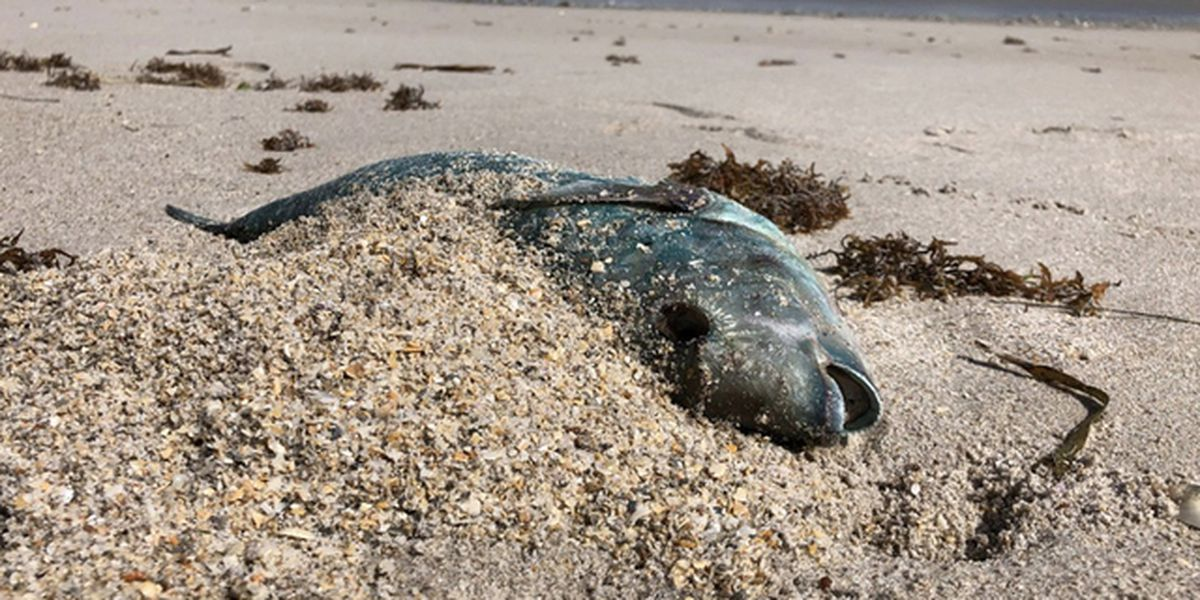 Expensive cost of red tide cleanup