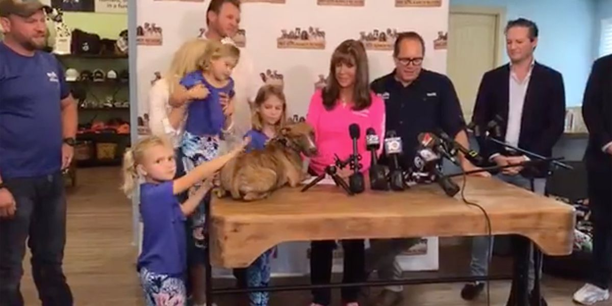 'Miracle' dog rescued from the Bahamas after Hurricane Dorian gets new family