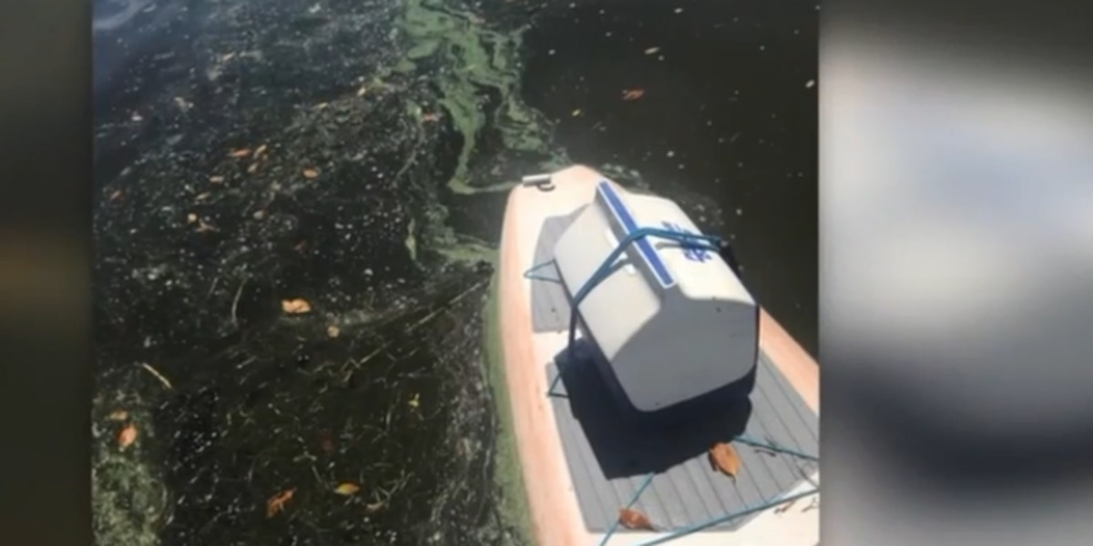 Reported algae spreading to St. Lucie County