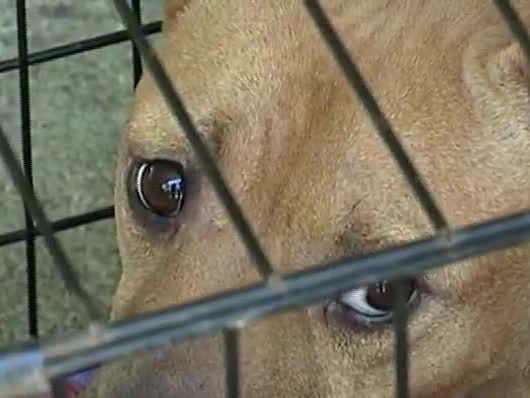 About 100 animals rescued from cramped, dirty FL boarding facility