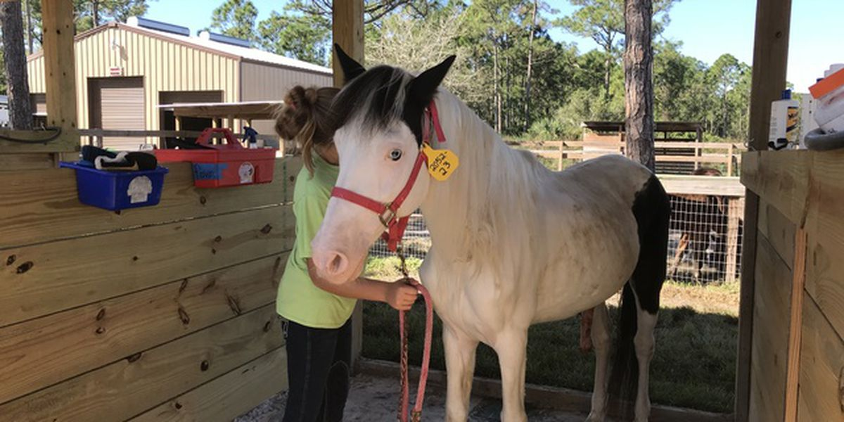 Neglected horses now recovering in South Florida