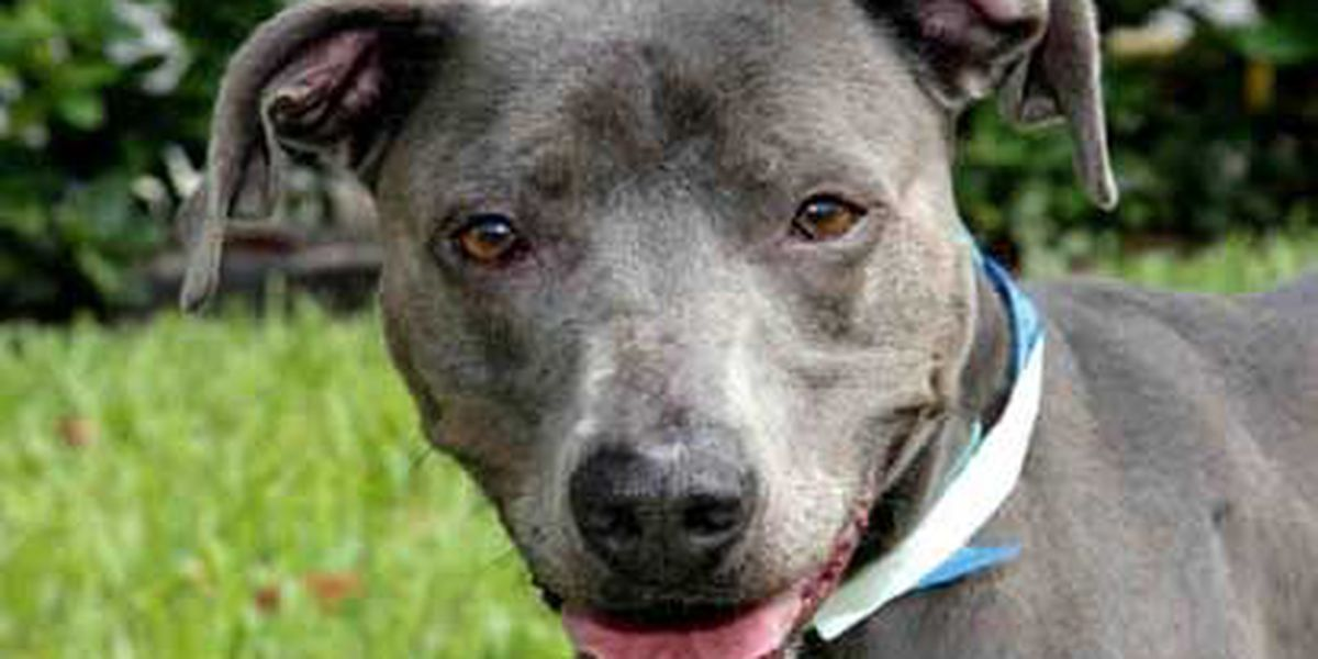 Adopted! Pet of the Week: Abby