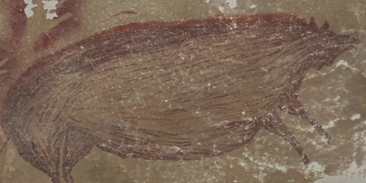 (No Sound) Drawing of pig may be one of world's oldest cave paintings