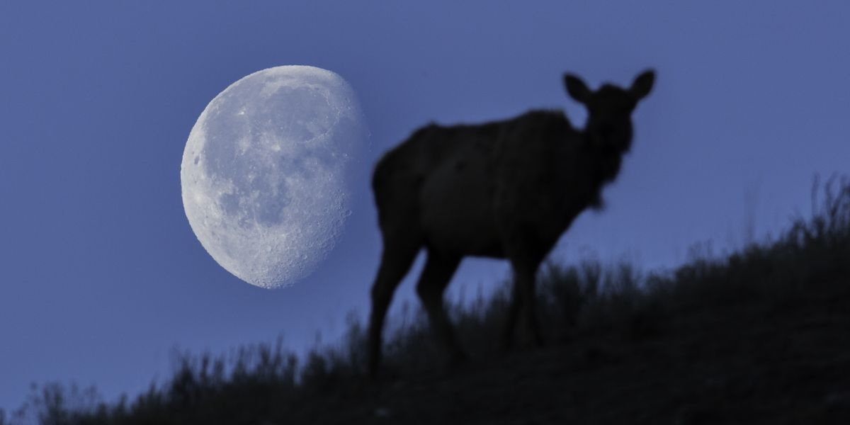 There's a full moon, lunar eclipse to go with this weekend's fireworks
