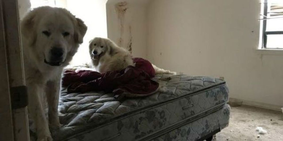 Mountain dogs found in deplorable conditions