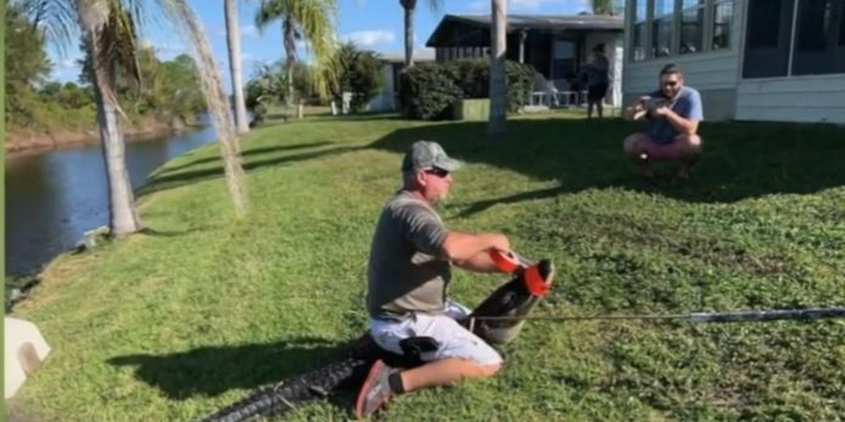 2 dogs killed by gators in Martin County