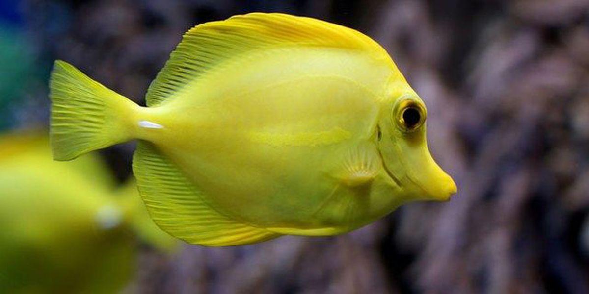 Judge halts aquarium fishing until review