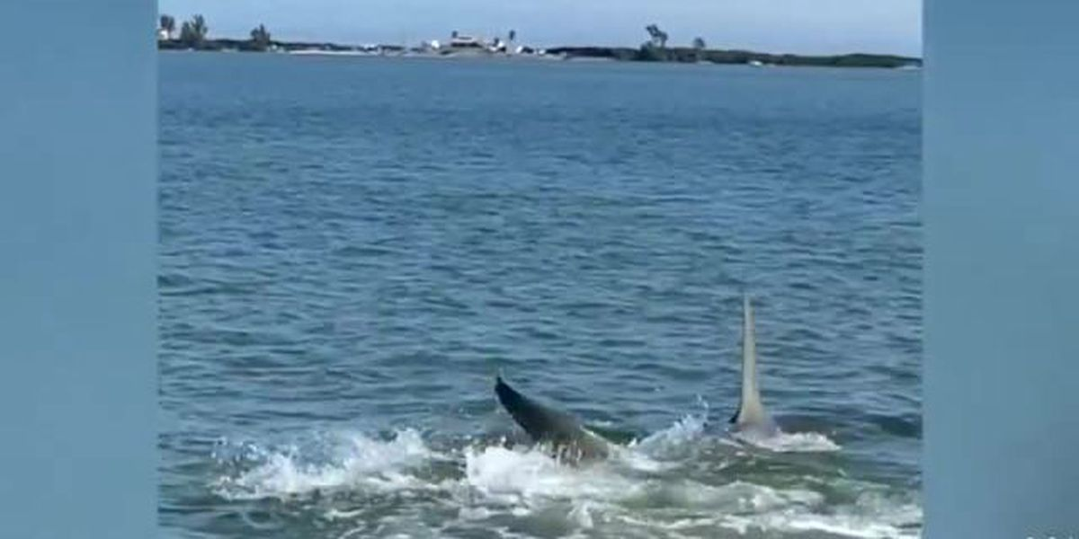 Paddleboarder captures video of encounter with 14-ft. shark