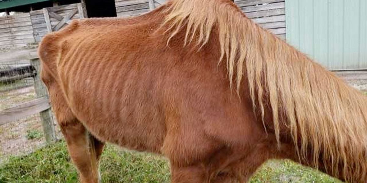 Animal cruelty investigation at Palm Beach County property
