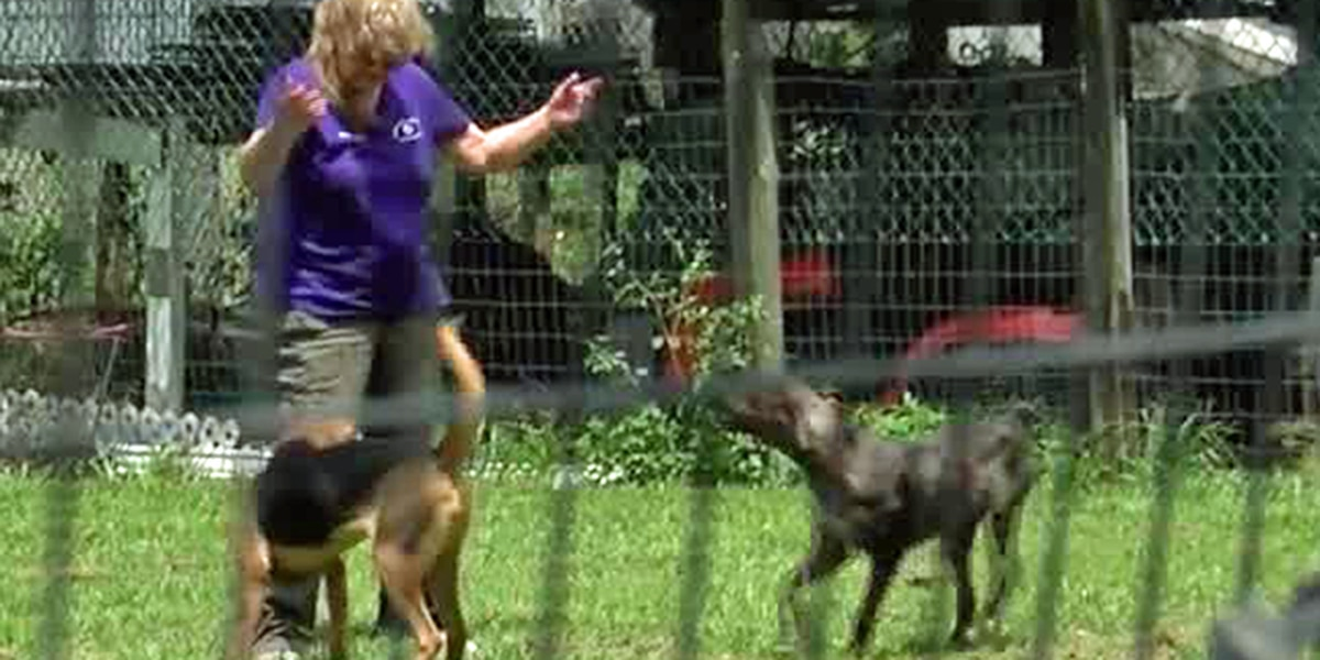Okeechobee County faces animal overcrowding