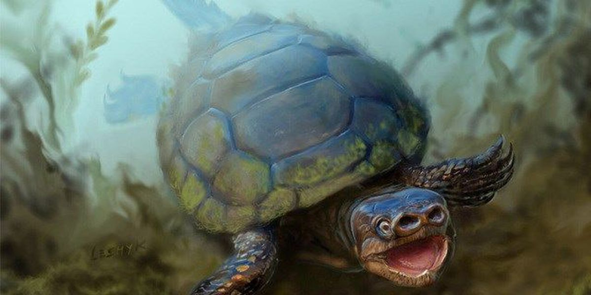 Meet Golden's bacon turtle, an extinct species with a pig snout