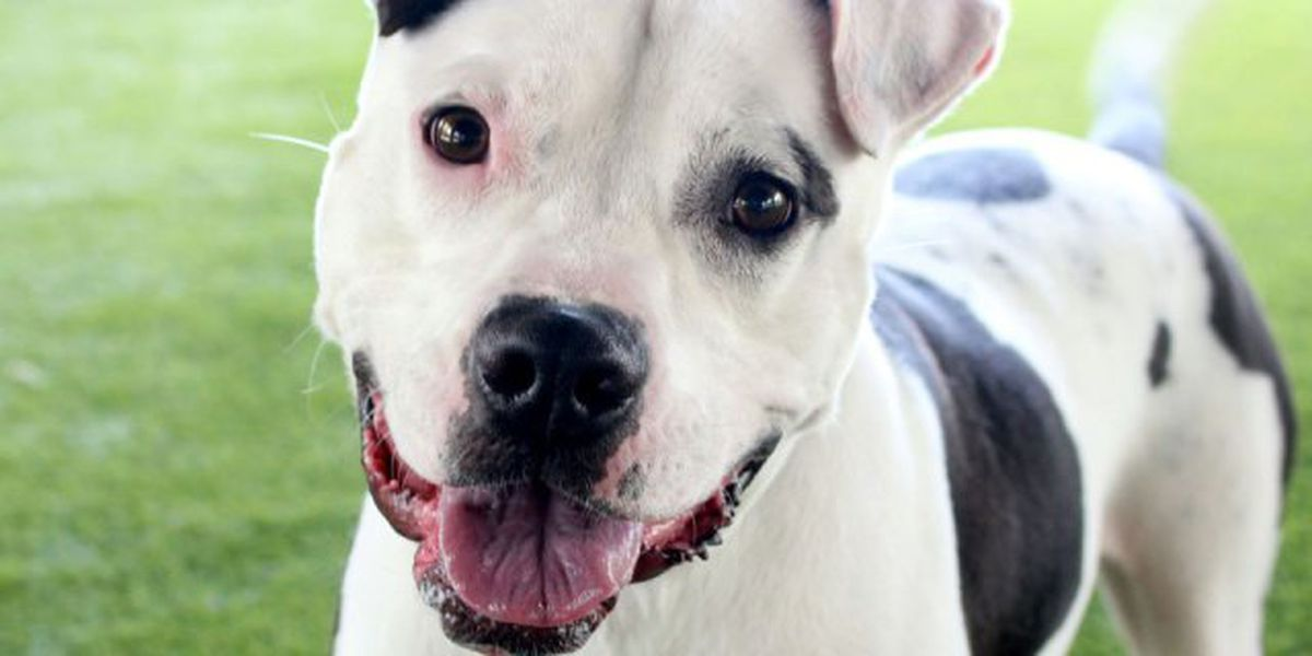 Dogs rescued from Texas up for adoption in West Palm Beach