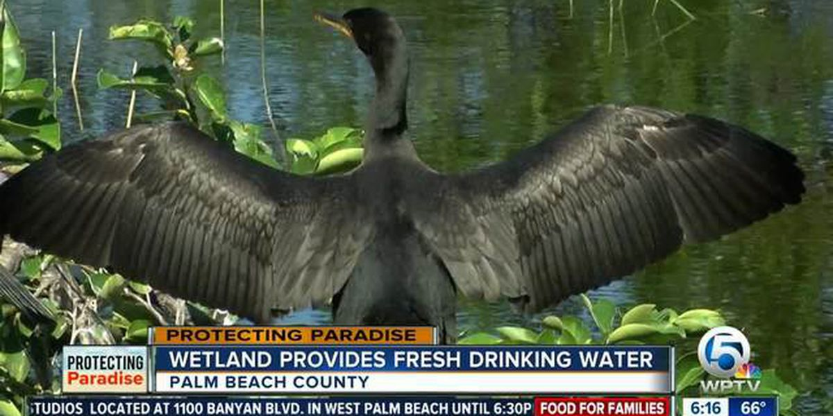 PBC wetlands created through wastewater facility