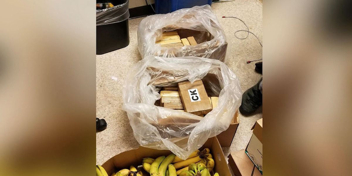 More than $1 million in cocaine found in banana shipments sent to Wash. grocery stores