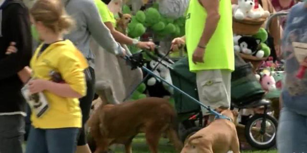 'Paws in the Park' event encourages animal adoption in West Palm Beach