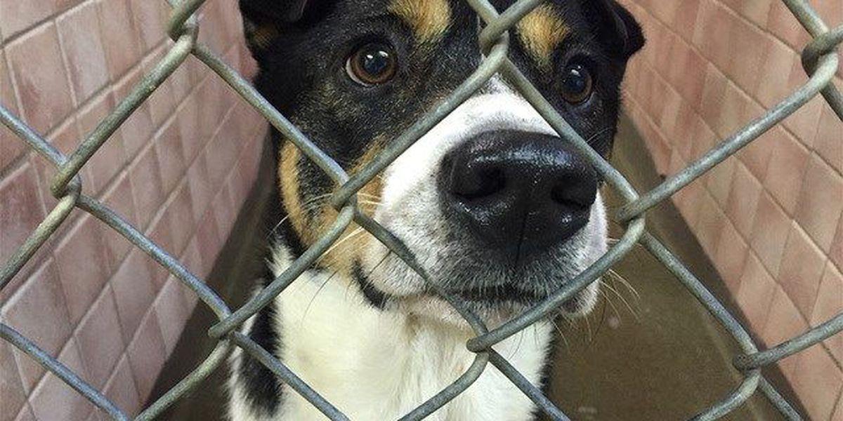 ASPCA makes huge seizure of 600 animals from no-kill shelter