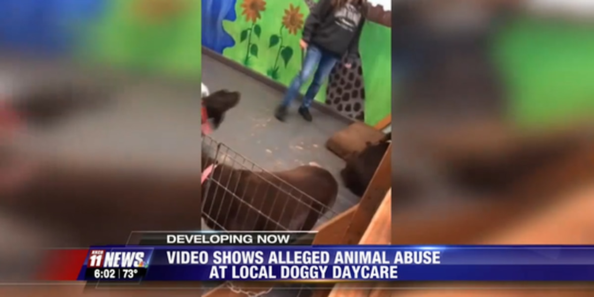Video shows doggy daycare owner hitting dog with stick