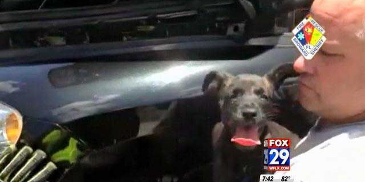 Crews rescue trapped dog from hood of car