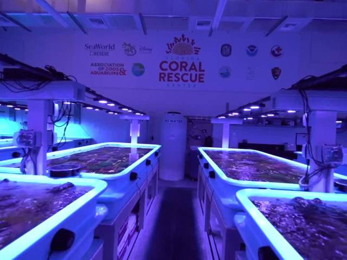 Florida Coral Rescue Center provides hope for future of reef system