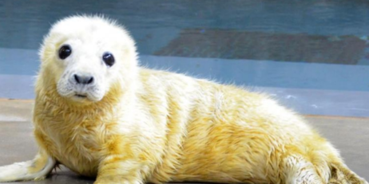 Nation's zoos show off their cutest animals