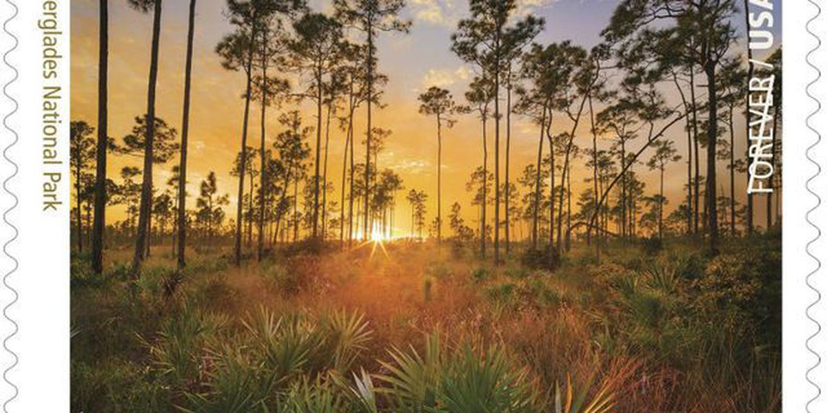 U.S. Postal Service reveals first look at new Everglades commemorative stamp