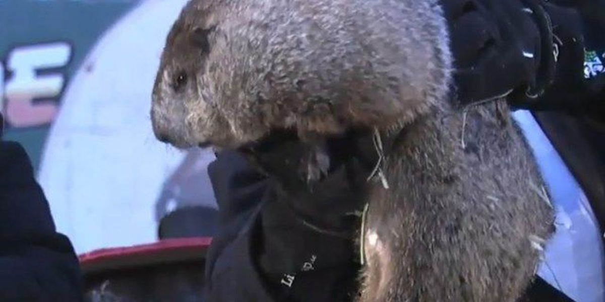 Punxsutawney Phil sees shadow, more winter ahead