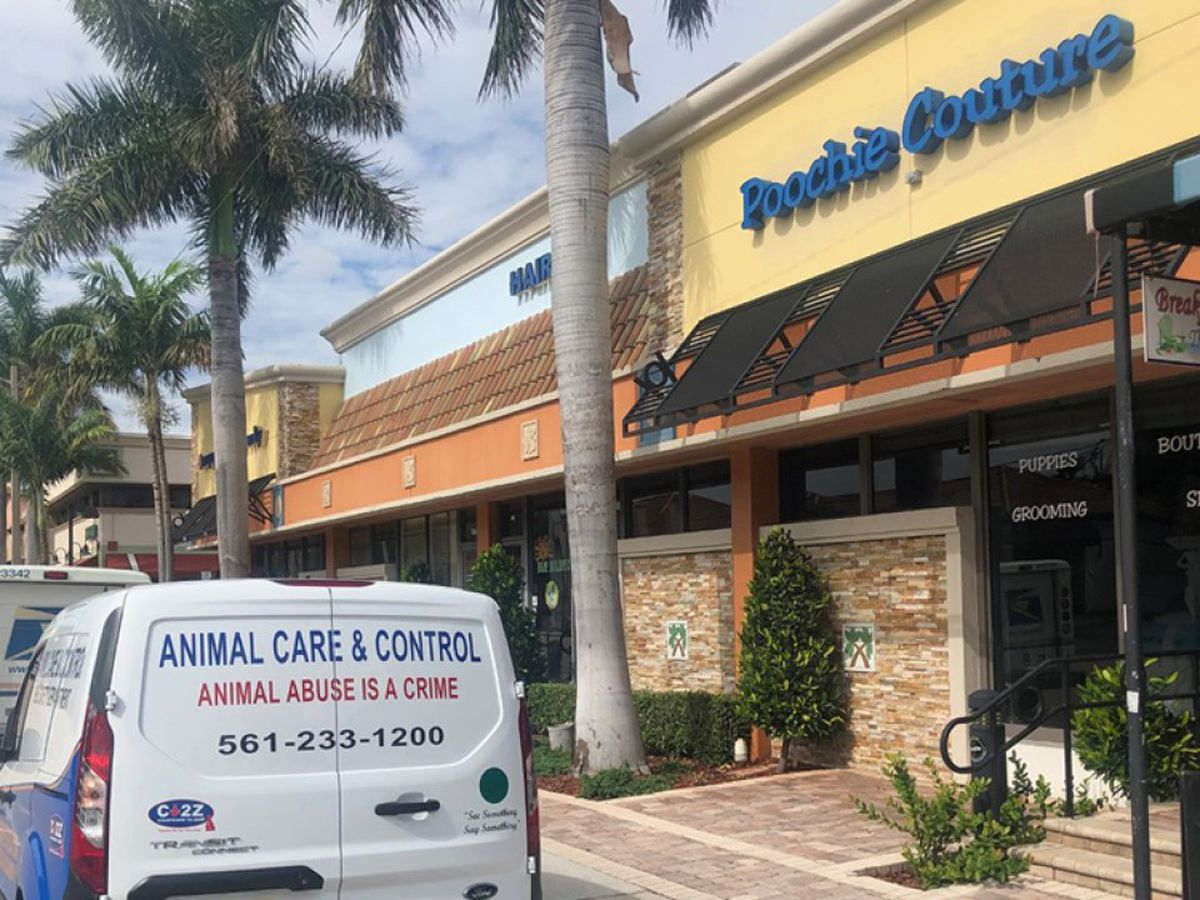 Boca Raton pet store under investigation by Palm Beach County Animal Care and Control