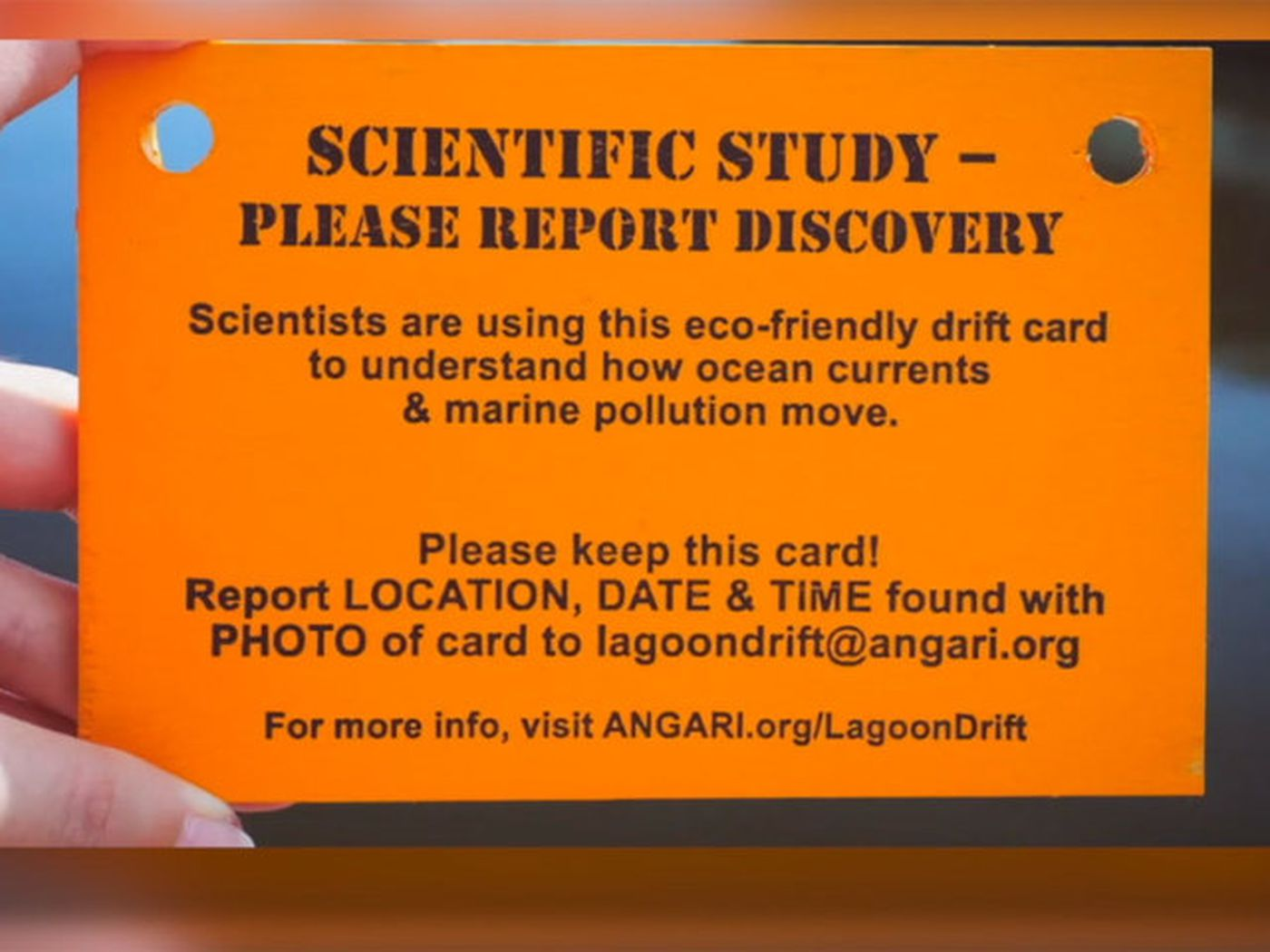 Drift Cards on Local Beaches Part of Citizen Science Study ...