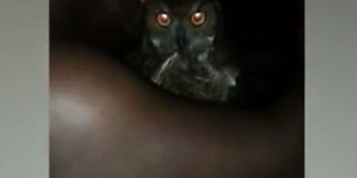 Viral video regarding protected owl investigated by FWC