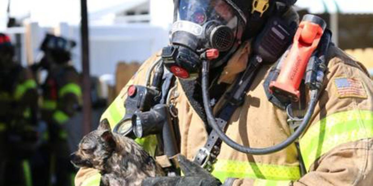 Dogs rescued from house fire