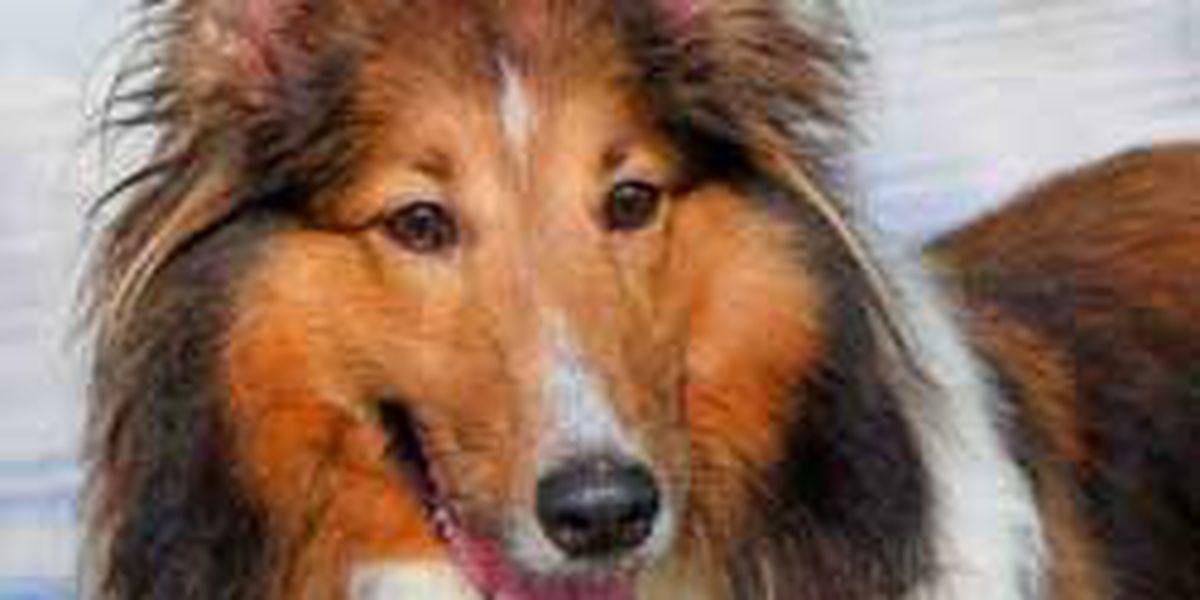 Adopted! Pet of the Week: Mya