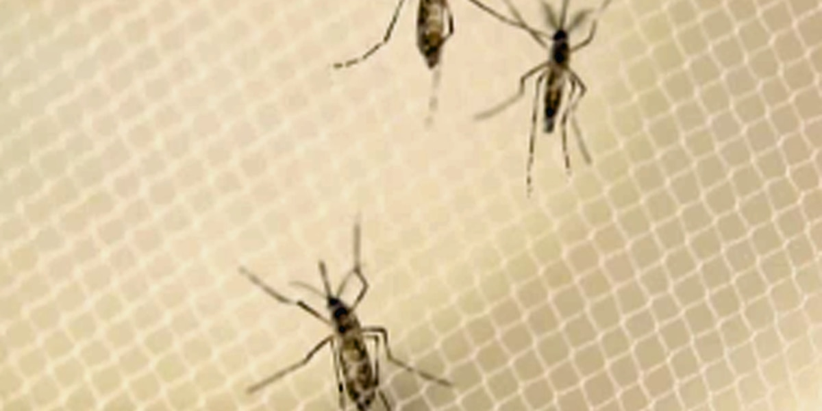 2nd Zika case reported in Palm Beach County