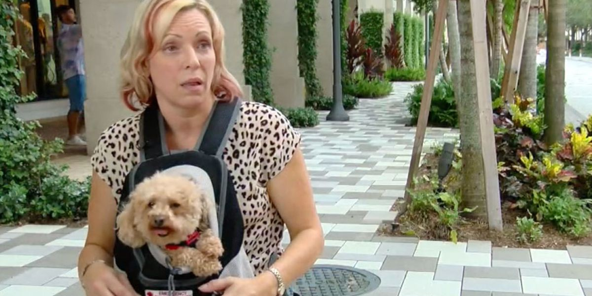 Service dog saves woman on airline flight