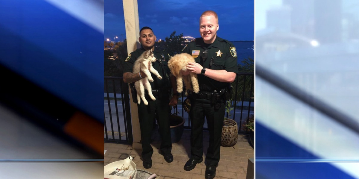 Deputies recover puppies stolen at Port St. Lucie store; two suspects detained
