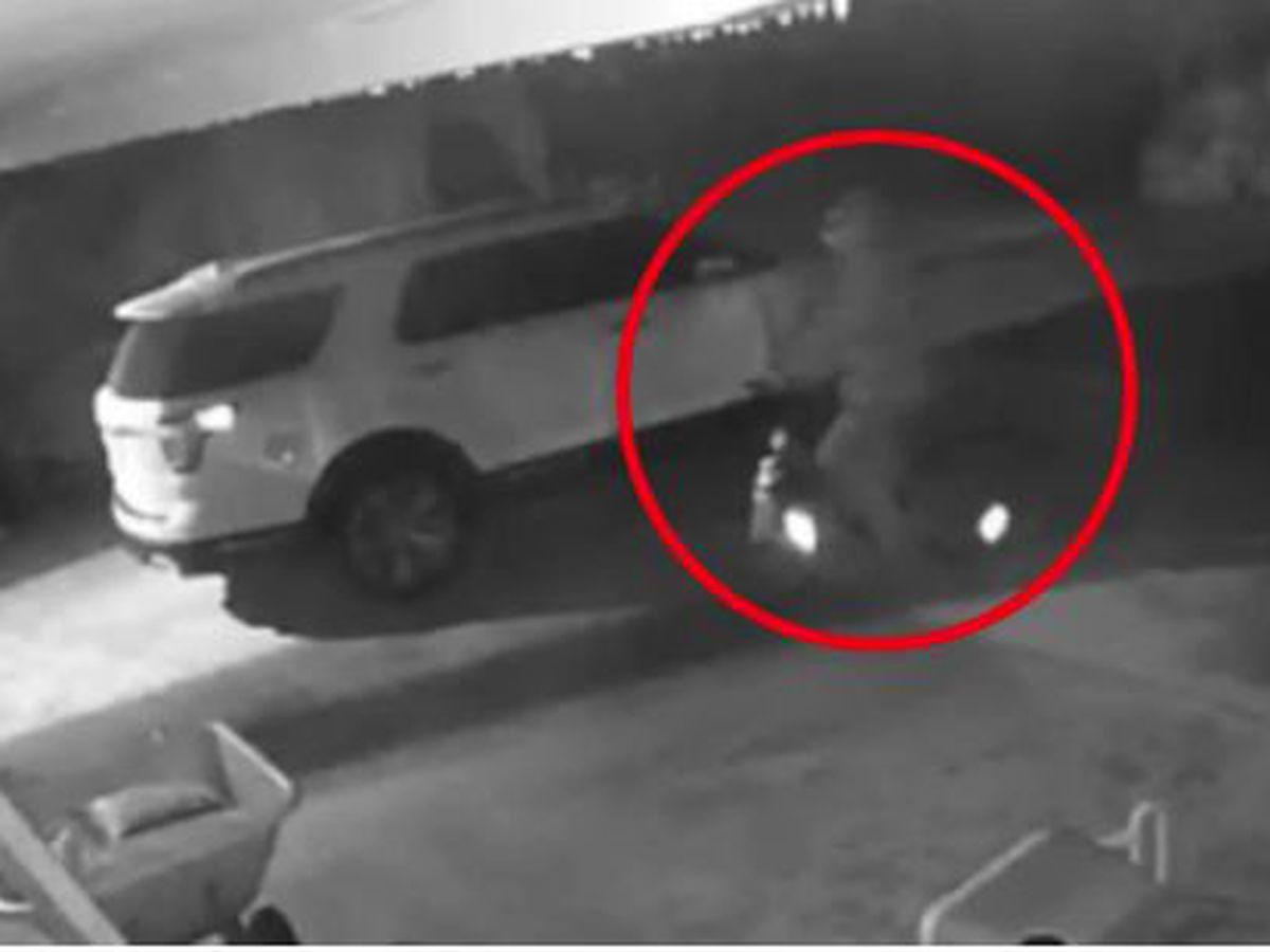 VIDEO: Search for car burglary suspect in Martin County