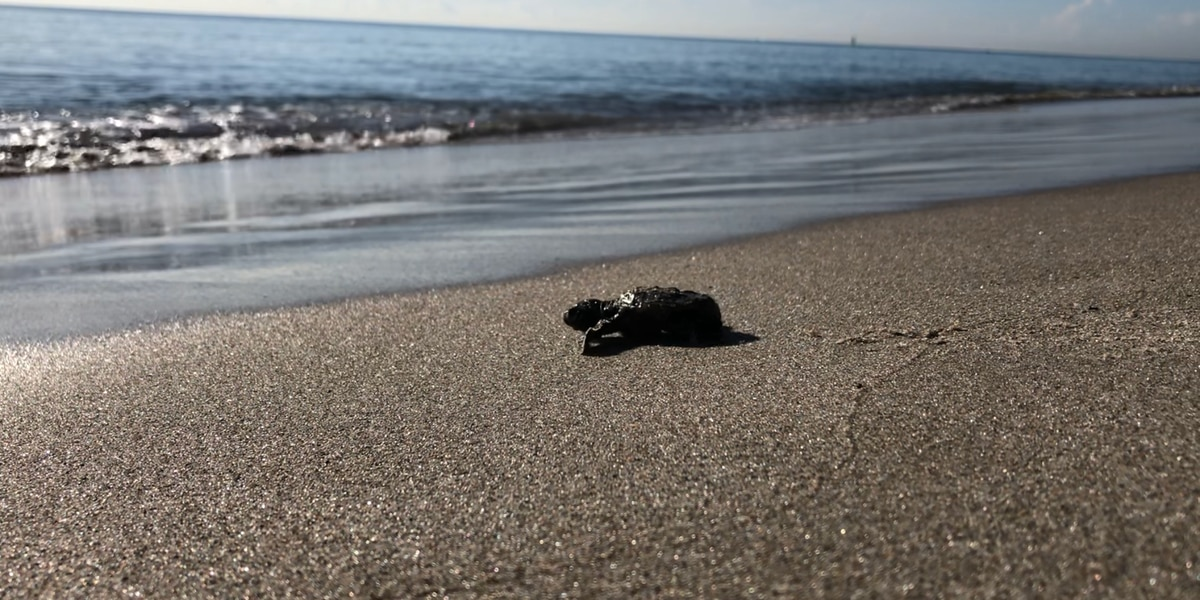 Beach closures could help marine life