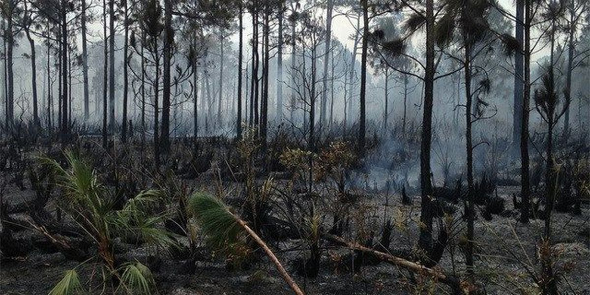 Burn ban in Indian River County