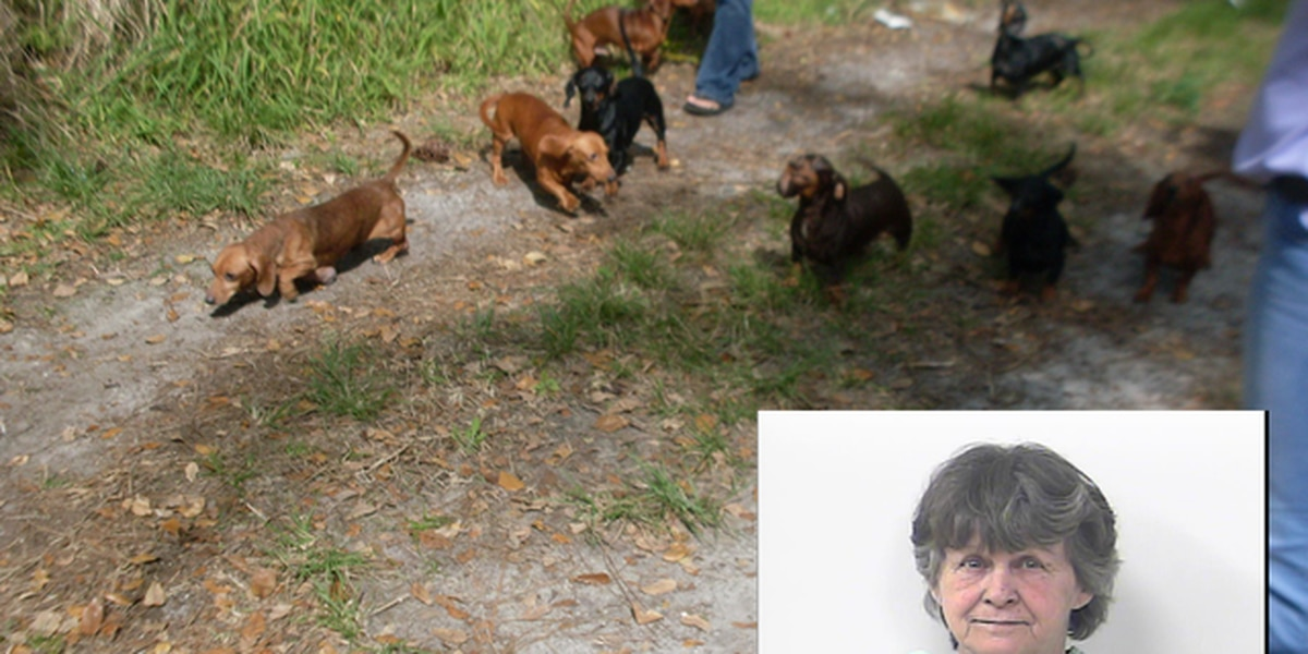 Beverly Louise Shott: Woman arrested on 28 counts of animal cruelty