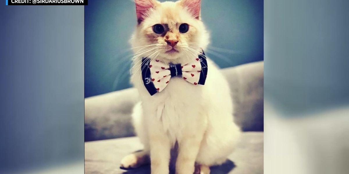 Teen creates bow ties for shelter animals