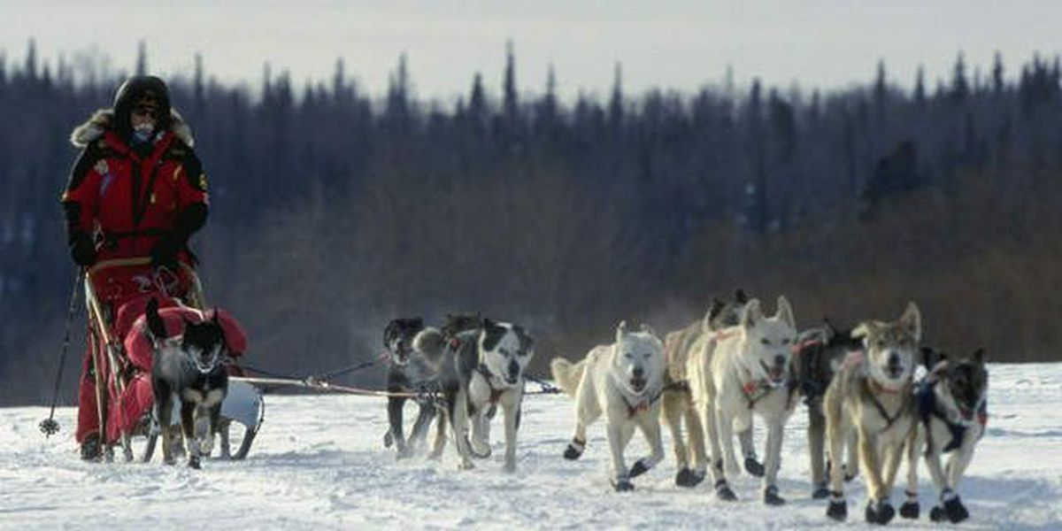 Mushers, fans gather for famous sled dog race