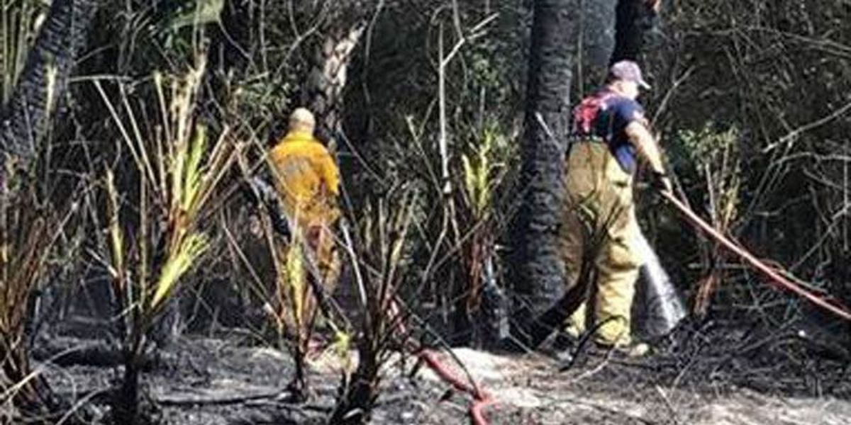 Crews quickly put out brush fire in St. Lucie
