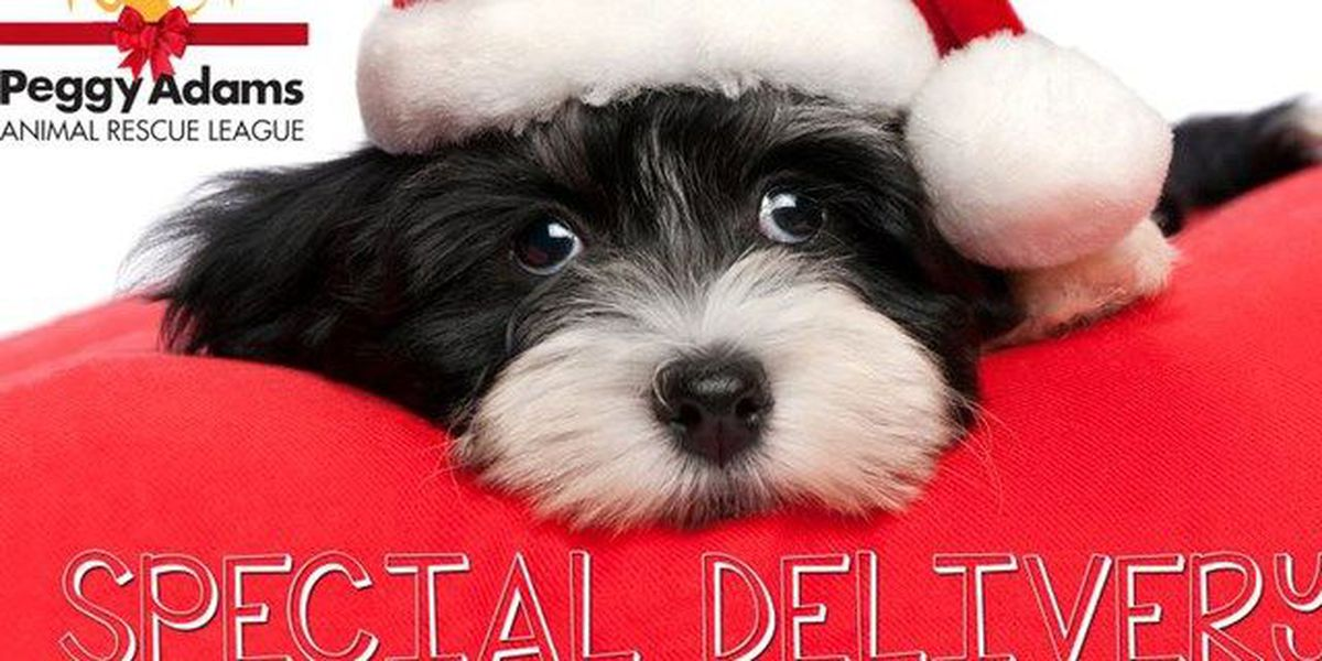 Adopt a pet, get it delivered Christmas morning