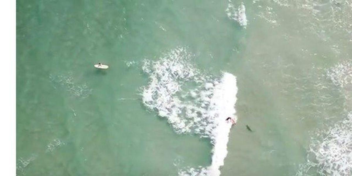 Video show surfer falling near shark