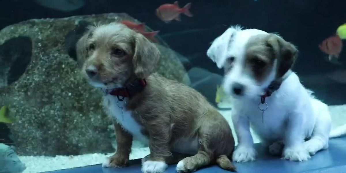 Pair of pups visit fish and Georgia Aquarium during pandemic