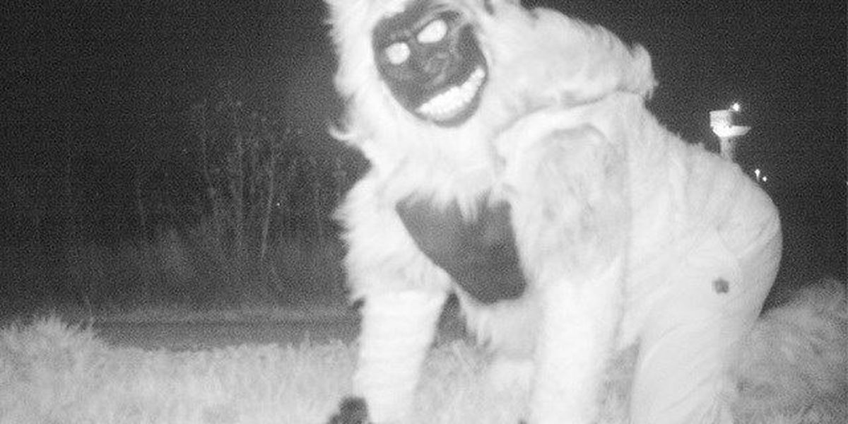 Wildlife cameras capture jokers dressed as lions